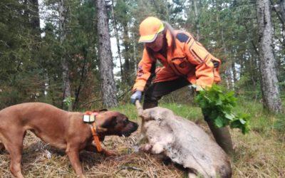 Vil du udfordres på dit samarbejde med din hund?